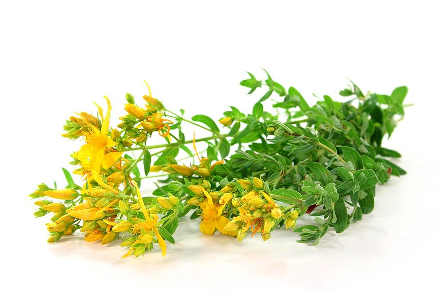 biljka kantarion