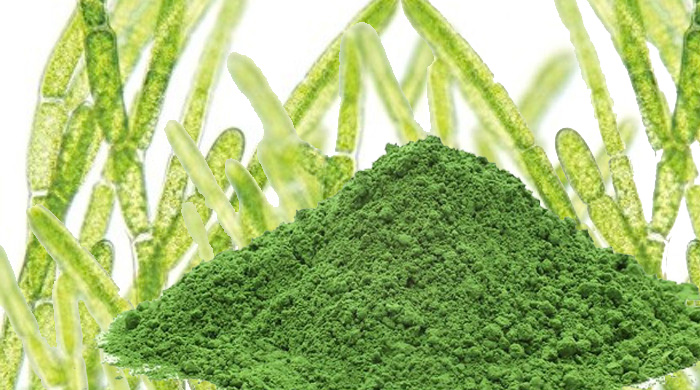 Hlorela alga - lekovita svojstva i upotreba