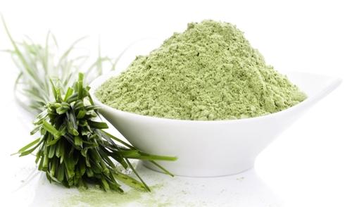 Pšenična trava - lekovita svojsta i recept