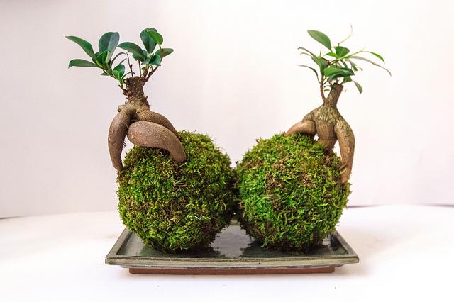 Ovo su sobne biljke koje čiste vazduh