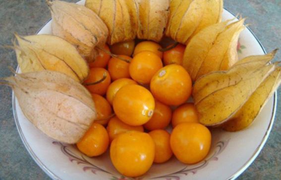 Peruanska jagoda – sadnja i uzgoj