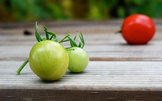 Zeleni paradajz – lekovita svojstva i recepti