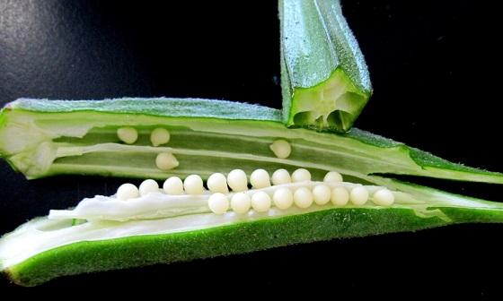 Bamija povrće - lekovitost, uzgoj i upotreba