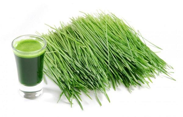 psenica zelena