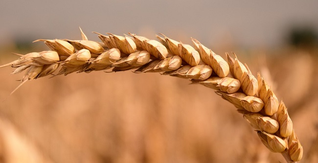 Top 5 najzdravijih i najpopularnijih žitarica